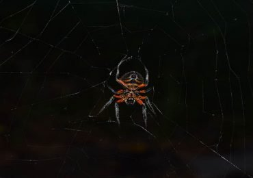 La gran araña