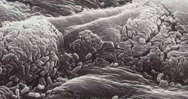 La humanidad con guardarropa de microbios cutáneos