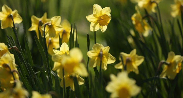 La llegada del polen