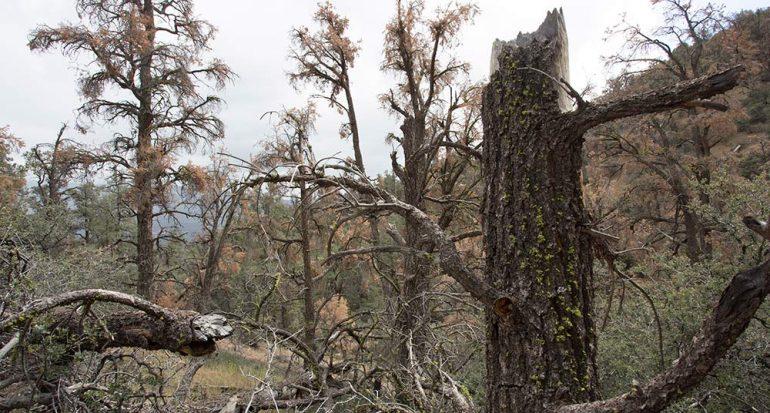 La mayor muerte de bosques