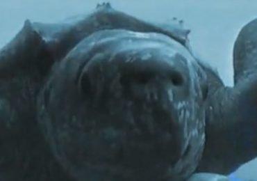 La mirada de una tortuga / Crittercam