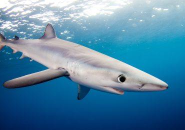 La misión: limpiar la imagen del tiburón