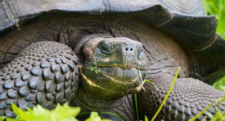La nueva especie de tortuga descubierta en las Galápagos