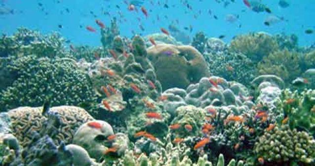 La pérdida de biodiversidad marina se acelera