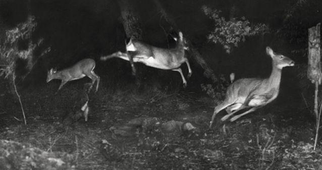 La primera imagen de vida salvaje de National Geographic