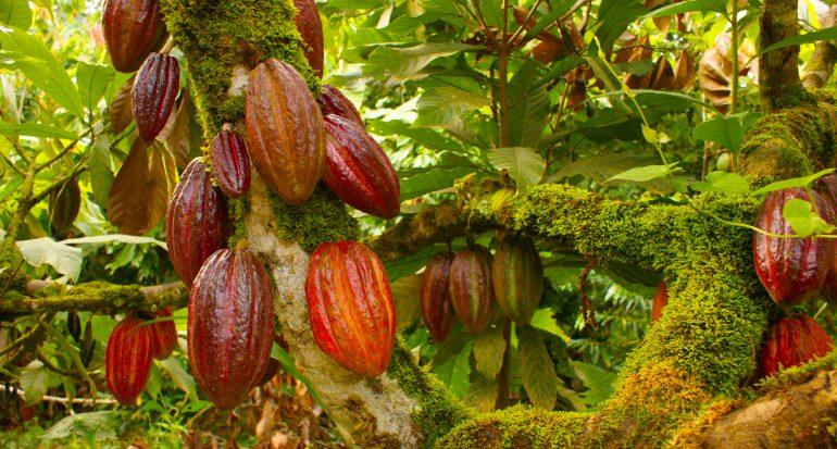 La ruta del cacao: un edén para niños.