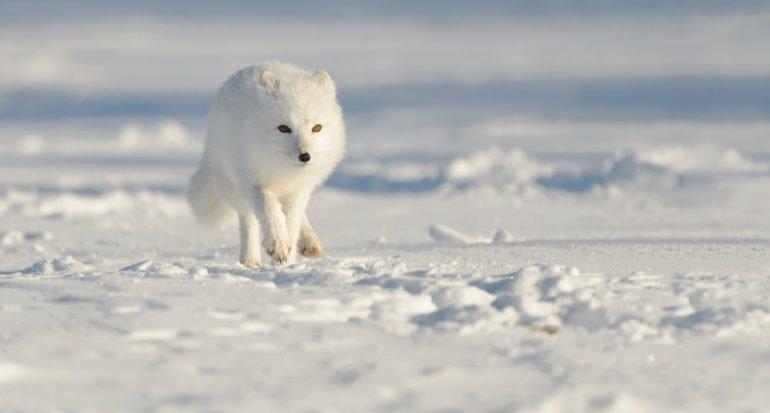 La salvaje belleza del Ártico