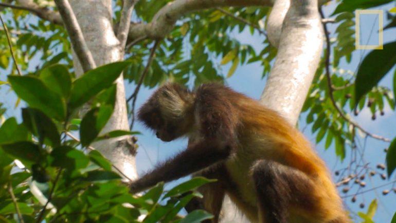 La selva y el manglar en un jardín botánico