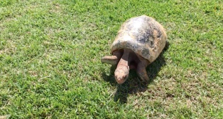 La tortuga que había perdido su caparazón