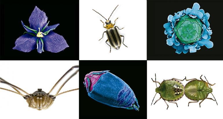 Laberintos Ocultos: miradas microscópicas de la naturaleza