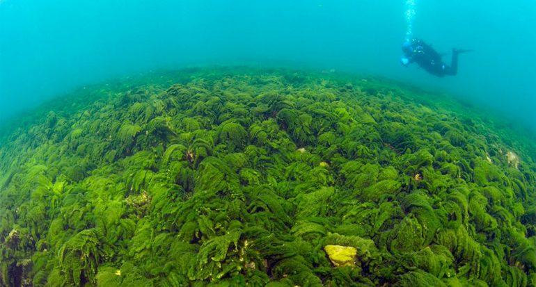 Lama en el lago más profundo del mundo