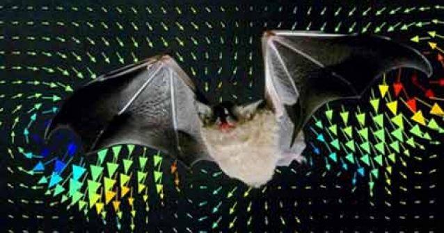 Las aeronaves se podrían inspirar en el vuelo del murciélago.