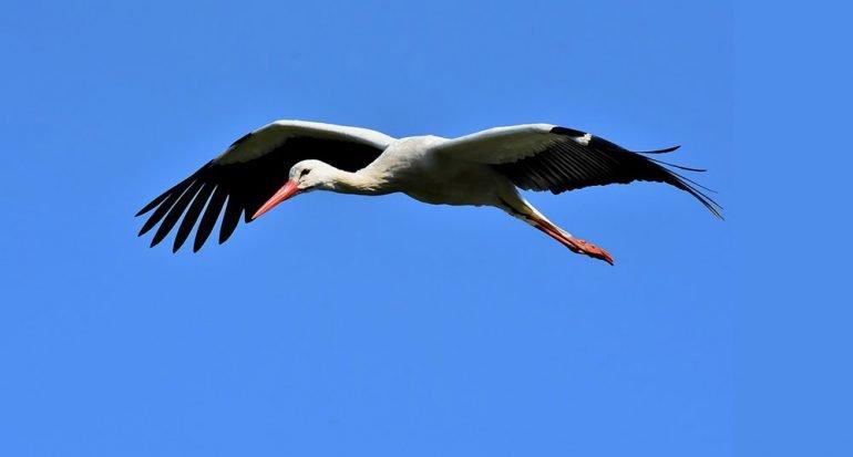 Las aves nos alertan sobre el calentamiento global