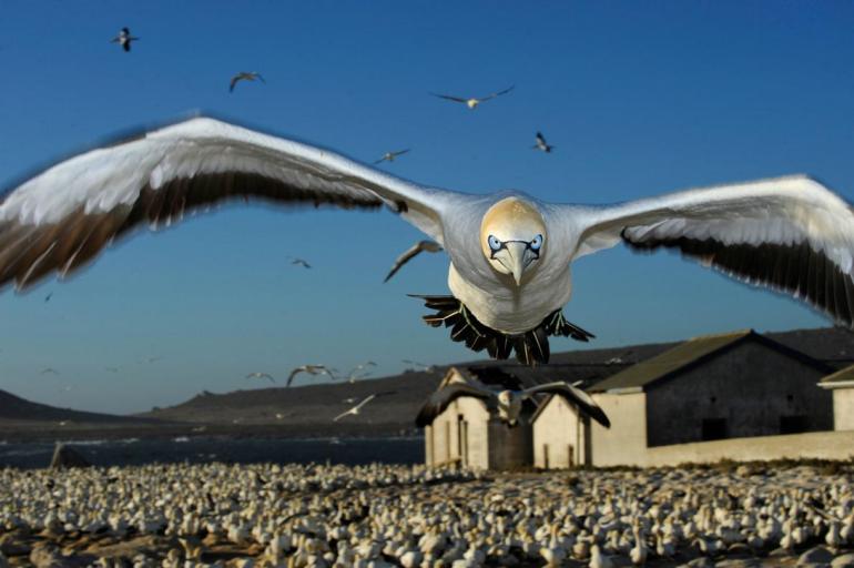 Las fotografías de fauna favoritas de los fotógrafos de National Geographic