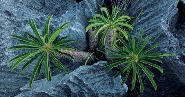 Las plantas reconocen parientes