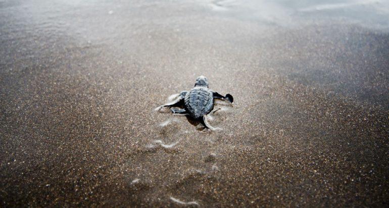 Las tortugas que necesitamos