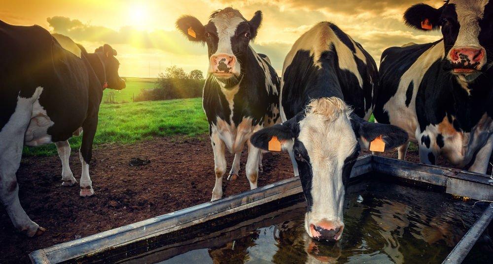 Leche sin vaca
