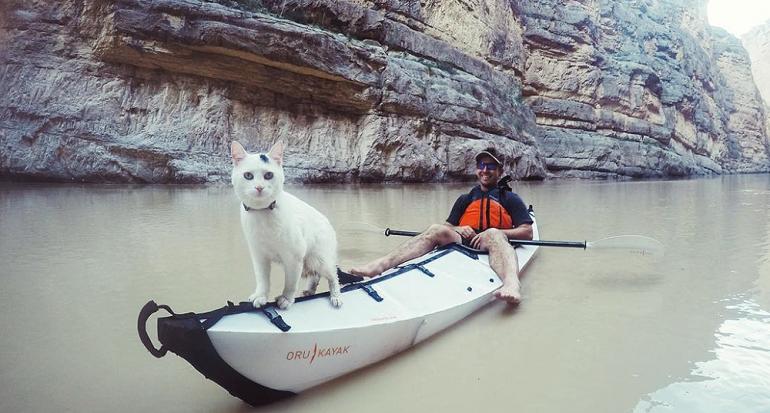 Les presentamos al gato viajero que conquistó Instagram