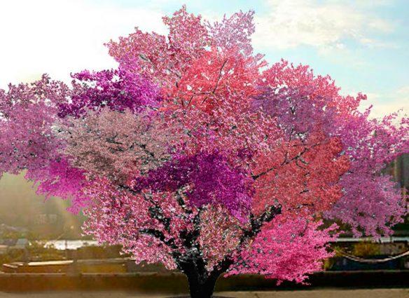 Les presentamos el árbol de los 40 frutos