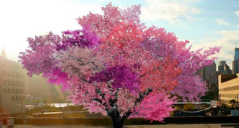 Les Presentamos El árbol De Los 40 Frutos National Geographic En