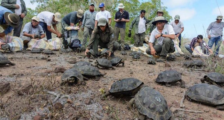 Liberan 190 tortugas gigantes en las Islas Galápagos