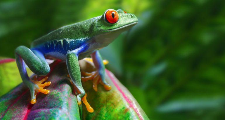 Lo que debes saber sobre la ?Certificación Rainforest Alliance?
