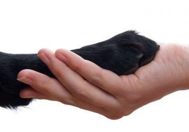 Los cuidados que los perros necesitan