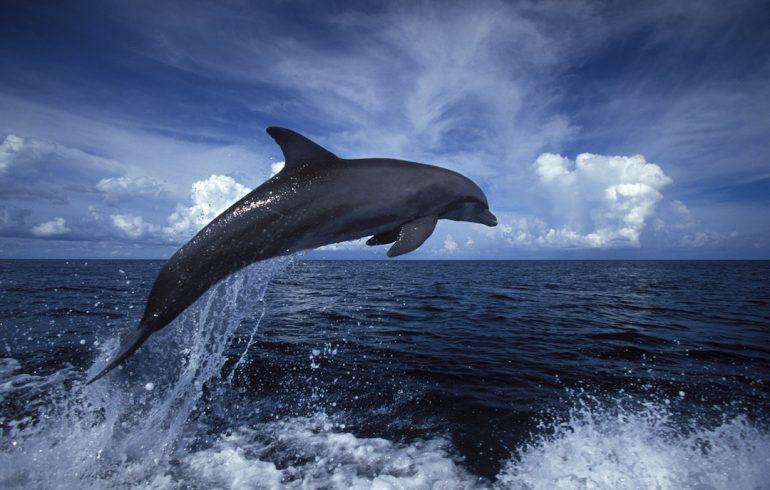 Los delfines tienen nombres