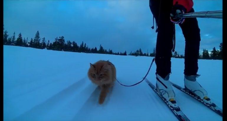 Los gatos pueden aprender a ?esquiar?