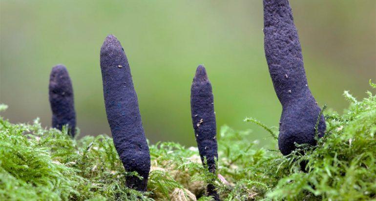 Los hongos más extraños del mundo