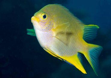 Los peces tienen una destreza humana