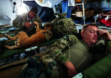 Los perros de la guerra
