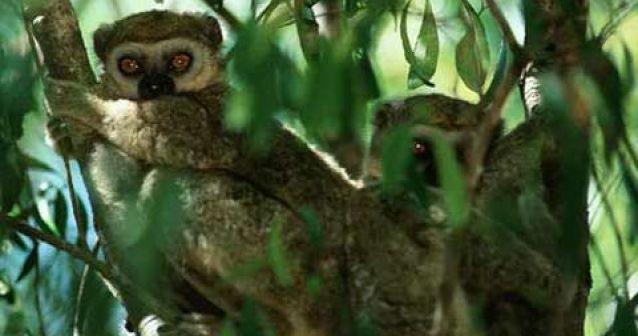Madagascar crea nuevas áreas protegidas