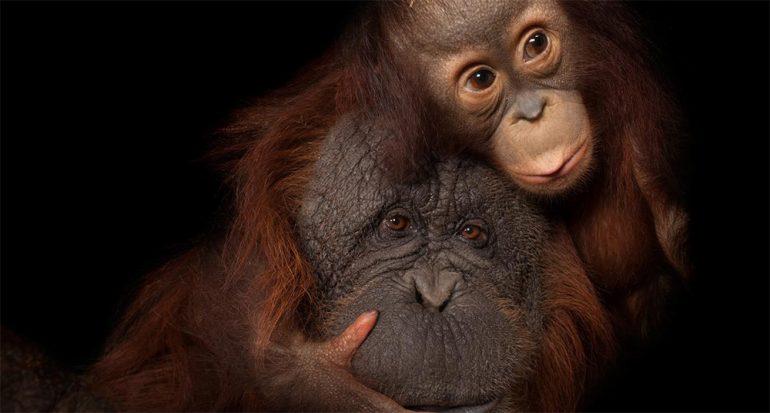 Madres animales nos recuerdan mucho a las nuestras