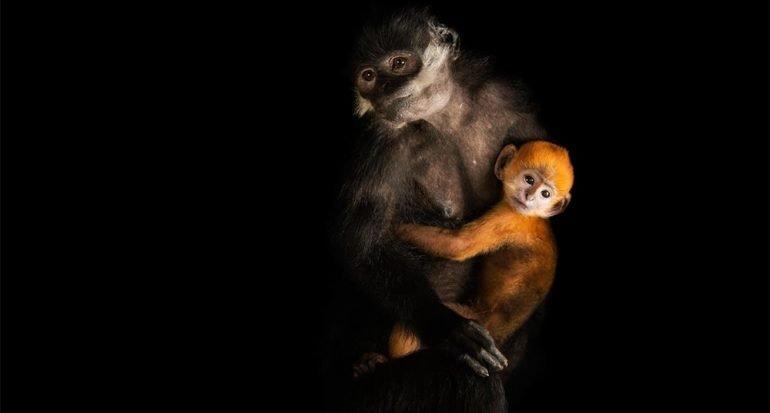 Madres e hijos: imágenes de mamás animales con sus bebés