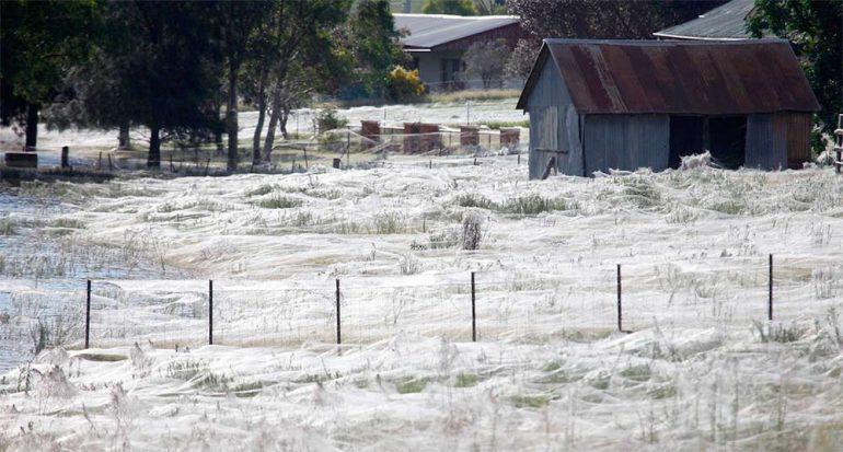 Millones de arañas diluvian en Australia