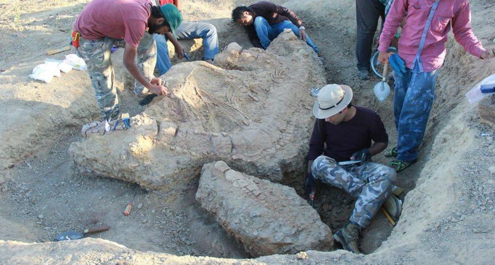 ?Monstruo marino? del Jurásico es encontrado en India