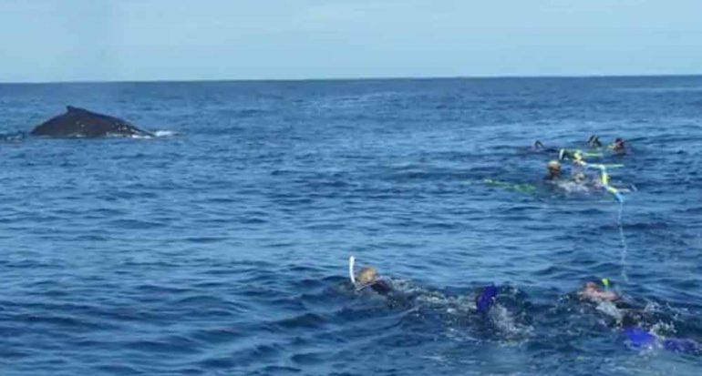 Nado con ballenas