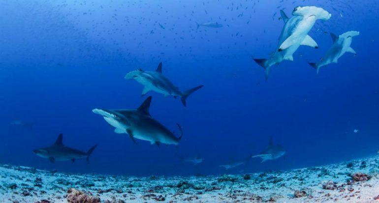 Nuevo santuario de las Galápagos