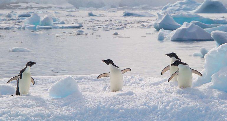 Nuevos cruceros a la Antártida