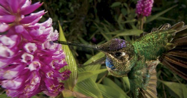 Orquídeas: amor y mentiras