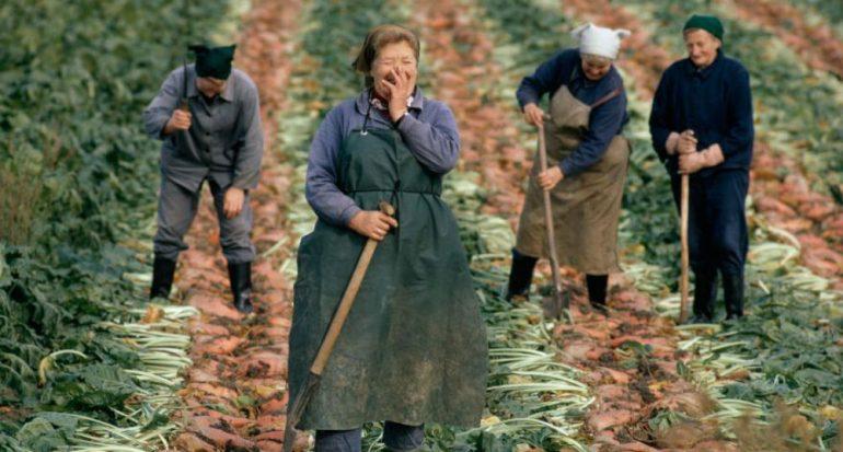 Otoño: tiempo de cosecha