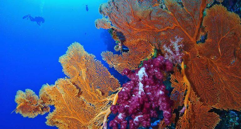 Palaos: Corales y peces multicolores