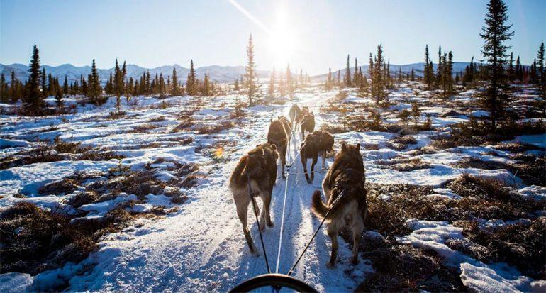 Perros han tirado de nuestros trineos durante milenos