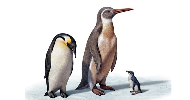 Pingüino prehistórico