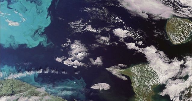 Plancton en el Ártico