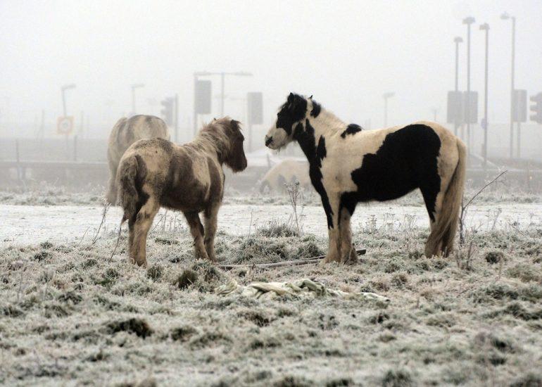Ponis protegidos