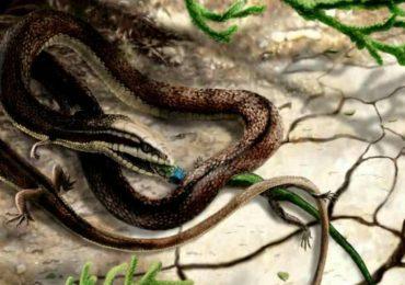 Por qué las serpientes no tienen patas (por ahora)