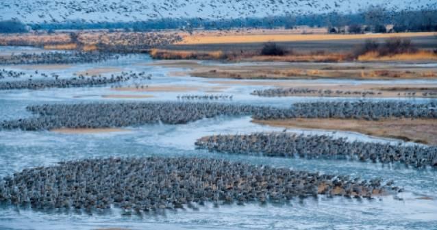 Posible cancelación de la autopista del Serengeti