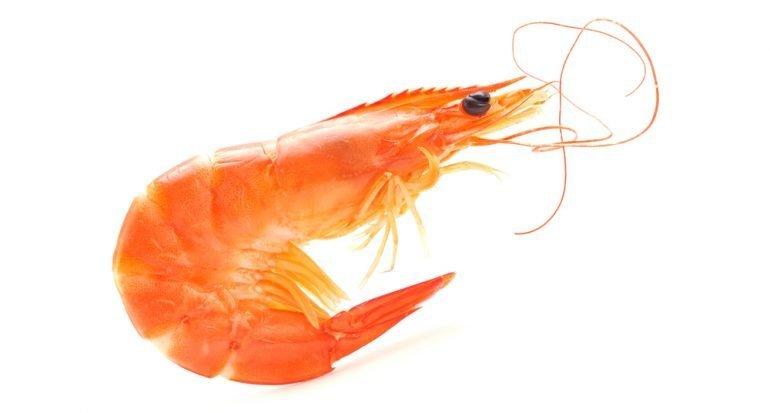 Pozole de camarón / Odisea del sabor
